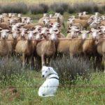 羊飼い FX 本 おすすめ